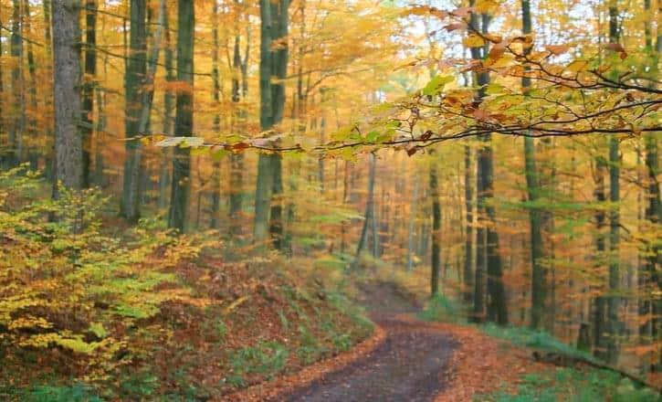 Come fotografare l'autunno