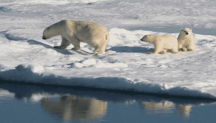 Canada e Caraibi orsi in Canada