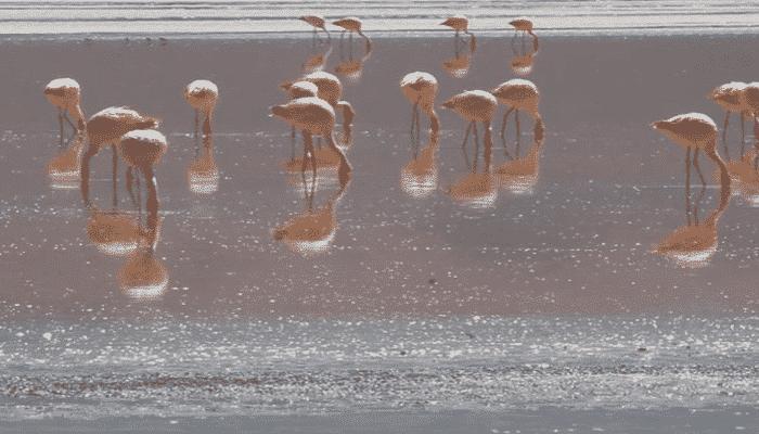 Salar de Uyuni fenicotteri rosa